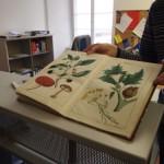 Alte Schulbücher in der Leopold-Sophien Bibliothek