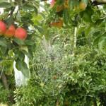 1 Ein wunderschönes Spinnennetz mit Tau.