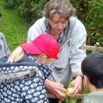 3 Frau Kitt zeigt uns, wie man Äpfel erntet.