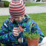 20 Wir untersuchen unsere Pflanze