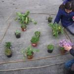 21 Wir stellen ein Bild aus unseren Pflanzen
