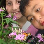 25 Wir bestaunen Schmetterlinge