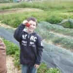 4 Stolz werden die schönsten Erdbeeren präsentiert