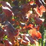 6 Wunderschönes Herbstlaub