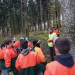 Waldarbeit in Zwiefalten