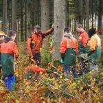 Arbeit im Wald in Zwiefalten